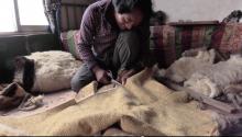Making a sheepskin robe in Tsekok